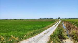 ขายที่ดินสุพรรณบุรี : ที่ดินแปลงสวย เกือบ 2 ไร่ ติดถนนลาดยาง ถนนเลียบคลองส่งน้ำชลประทาน อ.อู่ทอง จ.สุพรรณบุรี