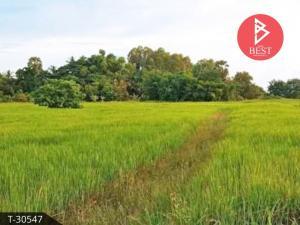 For SaleLandBuri Ram : Land for sale in the area of 6 rai 68.0 square meters in honor of Buriram.