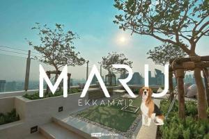 เช่าคอนโดสุขุมวิท อโศก ทองหล่อ : คอนโดเลี้ยงสัตว์ได้  ทำเลเอกมัย  Maru Ekkamai 2 , Pet friendly 🐶❤️