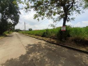 For SaleLandRamkhamhaeng,Min Buri, Romklao : Land for sale 75 square wah, Flora Ville village filled, nice project, large community, wide 15, deep 20