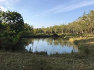 For SaleLandPhatthalung : Land suitable for home gardening