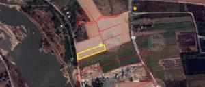 For SaleLandKamphaeng Phet : Land for sale 5 rai, Wang Bua Subdistrict, Khlong Khlung District, Kamphaeng Phet Province
