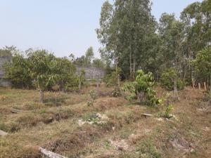 ขายที่ดินอุบลราชธานี : ขายที่ดิน 79 ตารางวา พร้อมสวนเกษตร (มีมะม่วง มะนาว มะพร้าว ฝรั่ง มะยม)