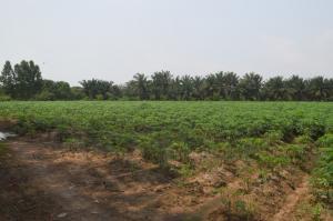 For SaleLandPattaya, Bangsaen, Chonburi : Land for sale in beautiful surroundings, Koh Chan District, Chonburi Province