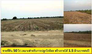 For SaleLandNakhon Pathom, Phutthamonthon, Salaya : Selling 50 rai of land suitable for planting sugar cane fields, generating income of 1.5 million baht per year.