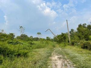ขายที่ดินรังสิต ธรรมศาสตร์ ปทุม : >>ที่ดินขายถูกมาก 200 ตรว. คลอง16 ลำลูกกา   (แถวนั้นมีบ้านคนอยู่อาศัย , มีสวน)