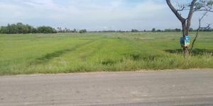 For SaleLandRatchaburi : 2 rai of land, rice fields and mountain views, Ban Pong, Ratchaburi province.