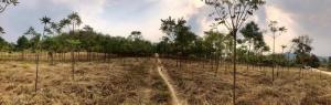 For SaleLandKanchanaburi : Land for sale in Sai Yok, Kanchanaburi.