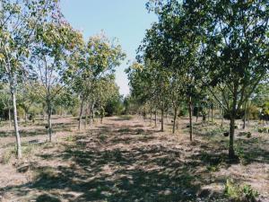 For SaleLandUbon Ratchathani : Land for sale in an area of 10 rai, priced at 120,000 baht per rai.