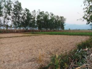 ขายที่ดินเชียงราย : ขายที่ดินเชียงราย ถูกมากๆ ติดถนน เหมาะสำหรับปลูกบ้านหรือทำการเกษตร