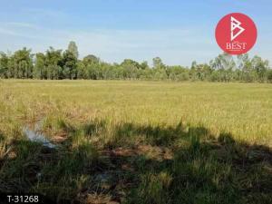 For SaleLandSakon Nakhon : Land for sale 23 rai 3 ngan 38 square wah Phanikhom Phok Noi.