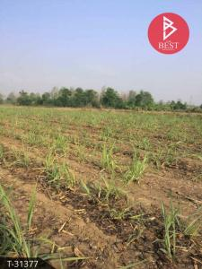For SaleLandTak : Land for sale in Mae Sot, Tak, 13.1.87 rai, beautiful view, behind a beautiful mountain, ready to build a resort