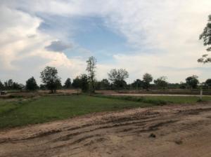 ขายที่ดินขอนแก่น : ที่ดิน YE-84 บ้านโนนเรือง ตำบลบ้านค้อ ขอนแก่น 2 ไร่ Bannonruang Khonkaen