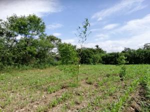 For SaleLandKorat KhaoYai Pak Chong : 2 ngan land for sale