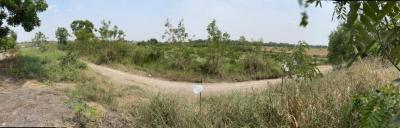 ขายที่ดินอยุธยา : ขายที่ดินเปล่า ซอยวัดเทพมงคล จ.พระนครศรีอยุธยา