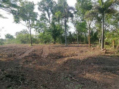 For SaleLandNakhon Pathom, Phutthamonthon, Salaya : Land for sale 1 rai near Nakhon Pathom city hall.
