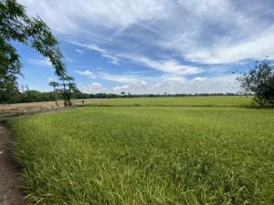For SaleLandAyutthaya : Land for sale, Ban Khae Subdistrict (Chang Lek), Ayutthaya Province, 8-0-8 rai cheaper than the appraisal price.