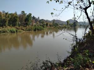 For SaleLandChiang Rai : Sale at a Phu Lae pineapple plantation next to the Kok River Land For Sale Very Beautiful Next to Maekok River