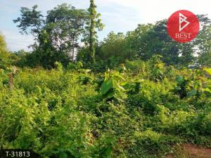 For SaleLandLoei : Land for sale in the area of 4 rai 98.0 square meters, Chiang Khan, Loei.