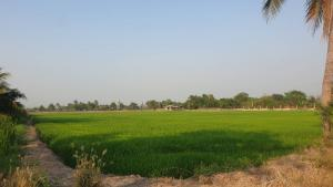 For SaleLandNakhon Pathom, Phutthamonthon, Salaya : Land in Bang Len, Nakhon Pathom, near Wat Phai Rong Wua, less than a million per rai. 9 rai 2 ngan 89.8 sq. Wah, complete utilities, only 7.5 million baht 0655942994 id line is tumrn