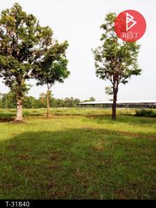 For SaleLandUbon Ratchathani : Land for sale on the road, area 17 rai 1 ngan 95 square wa, Phibun Mangsahan District, Ubon Ratchathani