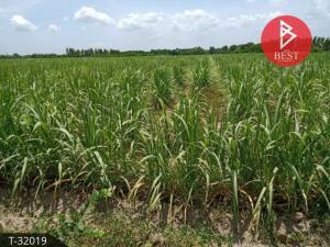 For SaleLandAng Thong : Land for sale with sugar cane plantation, 5 rai 96.0 square wah, Baan Phranwa, Angthong.