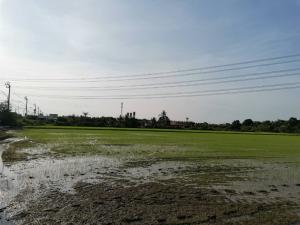 For SaleLandBangbuathong, Sainoi : Land for sale 12.9 rai, next to the main road, Ban Kluai-Sai Noi Road, not far from the Purple Line train station, the cheapest price is 9,496.-Baht/Square Wah