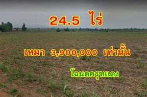 ขายที่ดินกาญจนบุรี : ขายที่ดินโฉนดครุฑแดง  24 ไร่ 2 งาน 39 ตรว ต.หนองรี อ.บ่อพลอย จ.กาญจนบุรี