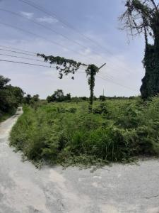 For SaleLandAyutthaya : Land for sale at Ayuthaya Near local road and along side with main road to Nakorn Luang Ampor and throug Ayuthaya in 20 minuite.
