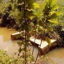 For SaleLandSamui, Surat Thani : Land for sale in Surat Thani