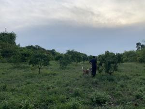 ขายที่ดินราชบุรี : ขายที่ดินพร้อมสวนมะม่วง(ต้นสาว) จ.ราชบุรี (หากสนใจจริงๆสามารถต่อรองราคาได้ค่า)