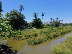ขายที่ดินบางแค เพชรเกษม : ขายที่ดิน เป็นที่สวน ถนนพุทธมณฑลสาย1 เนื้อที่ 10 ไร่ ใกล้รถไฟฟ้า ไม่ถึง 1 กม.