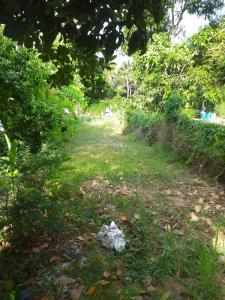 ขายที่ดินราชบุรี : ใจกลางอำเภอบ้านโป่ง ที่ดินสวยบรรยากาศธรรมชาติ ใกล้แหล่งความเจริญ คมนาคมสะดวก