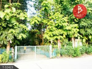 For SaleLandKalasin : Land for sale, area 8 rai, 1 ngan, 47 square wah with orchard, Nong Kung Si, Kalasin.