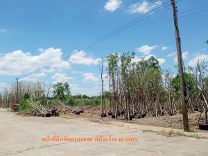 For SaleLandRangsit, Patumtani : ✨✨ Urgent sale of empty land, the price is the same as the appraisal!!! Rangsit-Khlong 9, area 1 rai, next to the alley from Rangsit-Khlong 9 Road, into the alley for 1 kilometer, beautiful plot, suitable for building a house / warehouse ✨✨