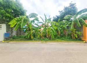 For SaleLandRangsit, Patumtani : Land for sale 53 square wa. Soi Lam Luk Ka 3.