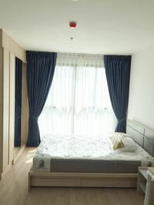 For RentCondoBangna, Lasalle, Bearing : Condo for rent: Ideo O2 (IDEO O2) P56