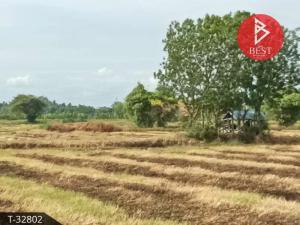 For SaleLandKorat KhaoYai Pak Chong : Land for sale 8 rai 1 ngan 65.0 square wa, Sung Noen, Nakhon Ratchasima for agriculture.