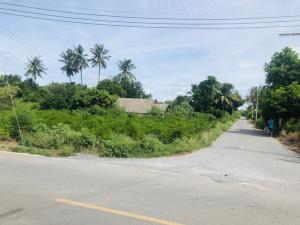 For SaleLandNakhon Pathom, Phutthamonthon, Salaya : Land for Wang Taku, Nakhon Pathom, 13 rai 2 ngan 36 sq.wa.