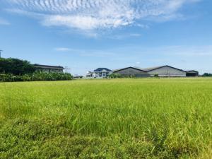 For SaleLandNakhon Pathom, Phutthamonthon, Salaya : Kamphaeng Saen land 16 rai 0 ngan 98 sq wa.