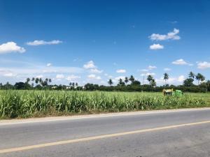 For SaleLandNakhon Pathom, Phutthamonthon, Salaya : Land of Wang Taku, Nakhon Pathom, 5 rai 3 ngan 49 sq.wa.