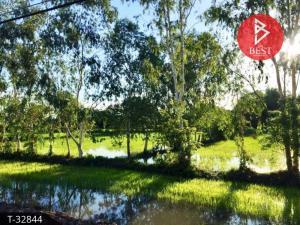 For SaleLandBueng Kan : Land for sale, area 4 rai 80 square wa, Si Wilai District, Bueng Kan Province.