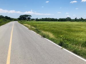For SaleLandNakhon Pathom, Phutthamonthon, Salaya : Land at Tum, 4 rai, 2 ngan, 53 sq m.