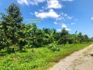 For SaleLandChanthaburi : Selling durian mixed garden, rambutan and others. House and land 46 rai, Chanthaburi.