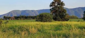 For SaleLandKorat KhaoYai Pak Chong : Land for sale in Khao Yai zone, Pak Chong, Mu Si Subdistrict, Pak Chong District, 3 rai, 2.2 million per rai, beautiful Khao Yai view.