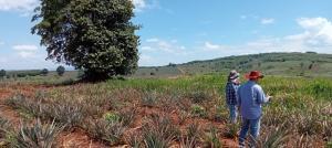 ขายที่ดินเชียงราย : ขายที่ดินเนินสวยมากเหมาะทำสนามกล้อฟ 509ไร่ ยกแปลงขายไร่ ละ 160000 บาท  Land for sale on a very beautiful hill, suitable for a golf course, 509 rai