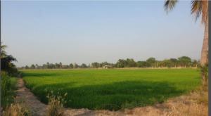 For SaleLandNakhon Pathom, Phutthamonthon, Salaya : Land for sale in Bang Len near Wat Phai Rong Wua, less than a million per rai, 9 rai, 2 ngan, 89.8 sq. wa.