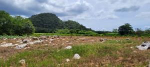 For SaleLandKorat KhaoYai Pak Chong : Land for sale in Pak Chong, Khlong Muang Subdistrict, 10 rai, 350,000 per rai