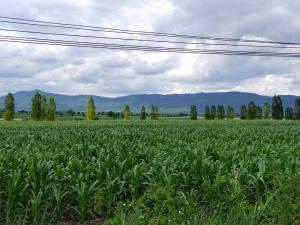 For SaleLandKorat KhaoYai Pak Chong : Beautiful land for sale, Khao Yai, Pak Chong, 1 rai, 3 plots, 1.6 million per rai, negotiable urgently!!!!