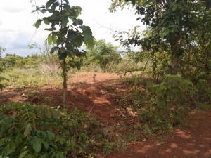 For SaleLandSakon Nakhon : Land for sale near Sakon Nakhon Kasetsart University.